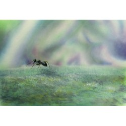 Paper Print Airbrush - Fourmis the Ant