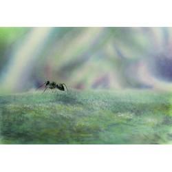 Paper Print Airbrush - Fourmis the Ant