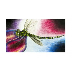 Original Drawing - Dragon Fly