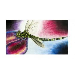 Original Zeichnung - Libelle